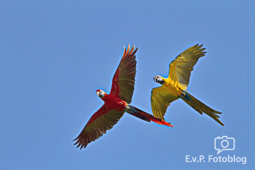 Vogelpark Walsrode 2014 I (EvP)