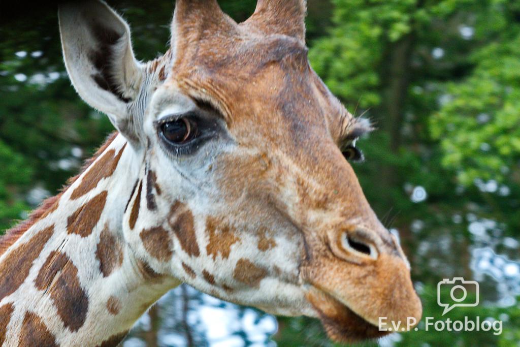 Serengeti-Park 2014 (EvP)