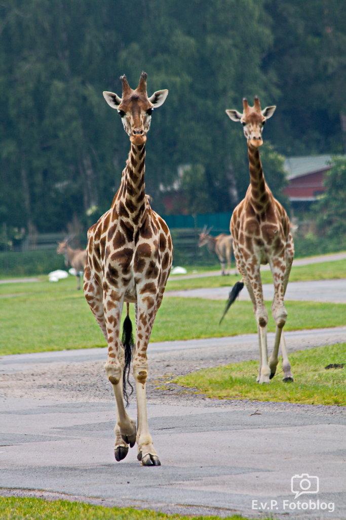 Nadja-Serengeti-140523-002.jpg
