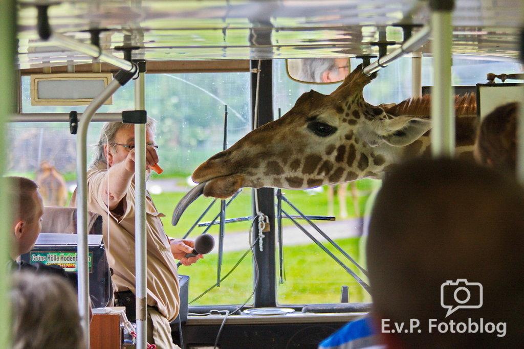 Nadja-Serengeti-140523-005.jpg
