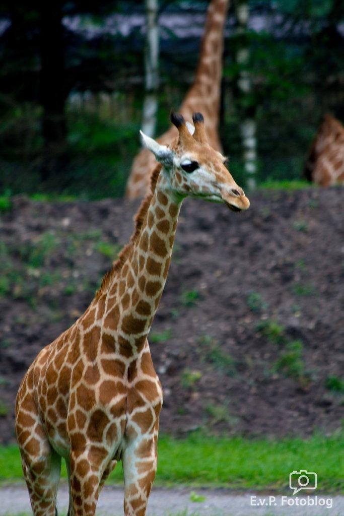 Nadja-Serengeti-140523-009.jpg