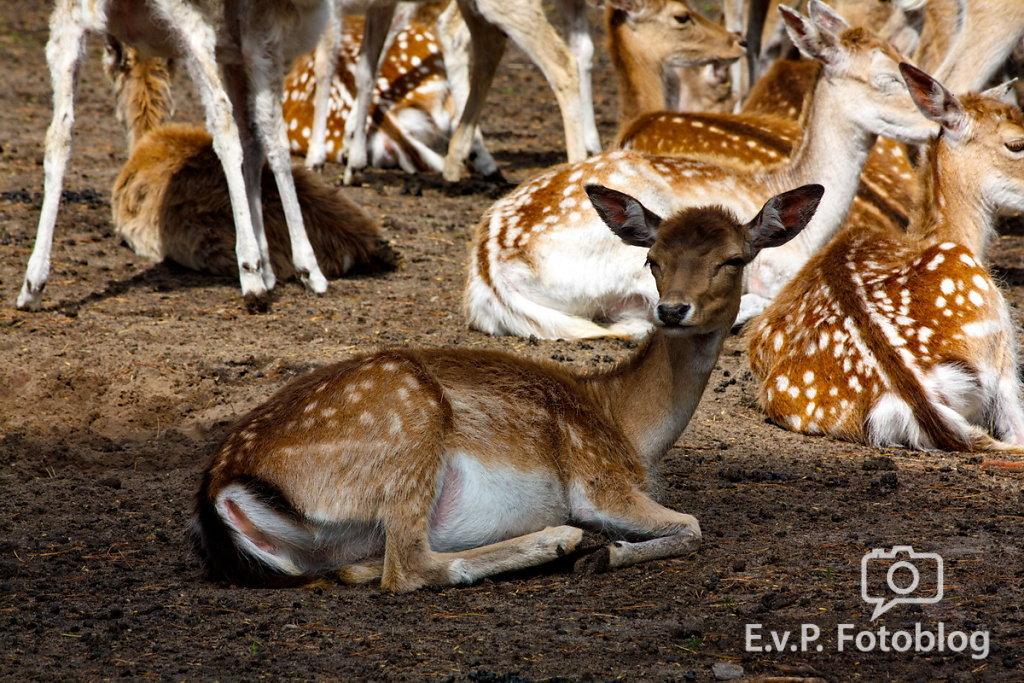 Nadja-Serengeti-140523-011.jpg
