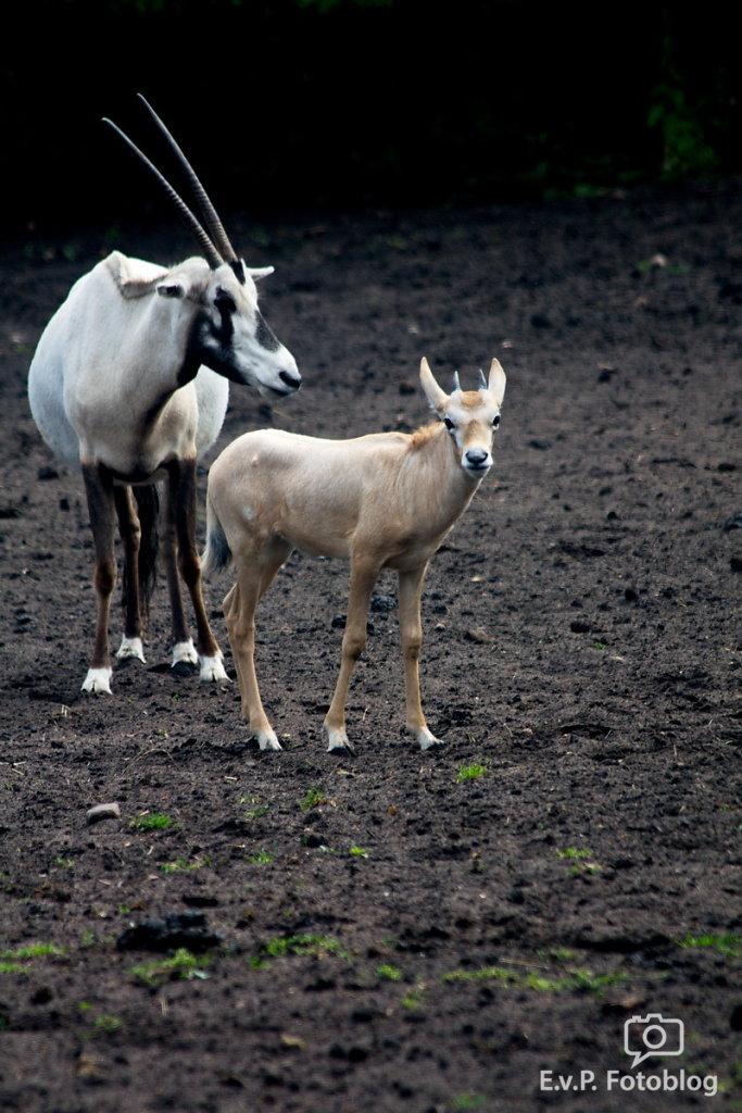 Nadja-Serengeti-140523-012.jpg