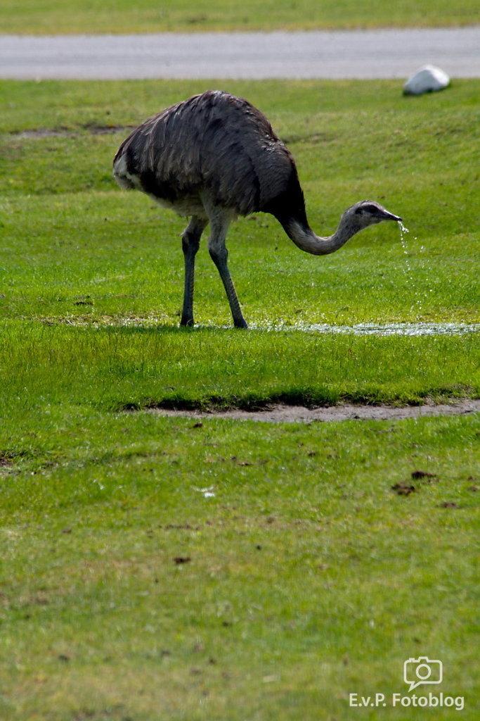Nadja-Serengeti-140523-017.jpg