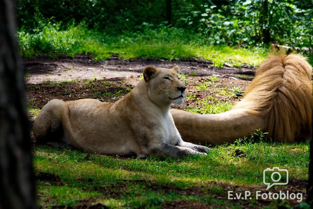 Nadja-Serengeti-140523-023.jpg