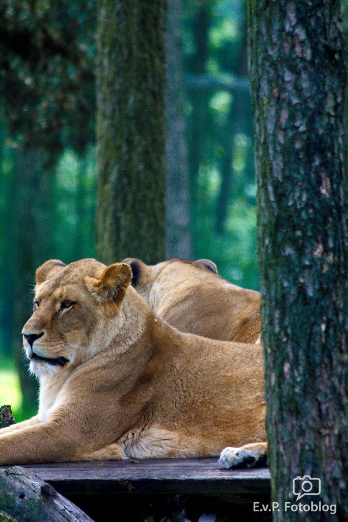 Nadja-Serengeti-140523-024.jpg