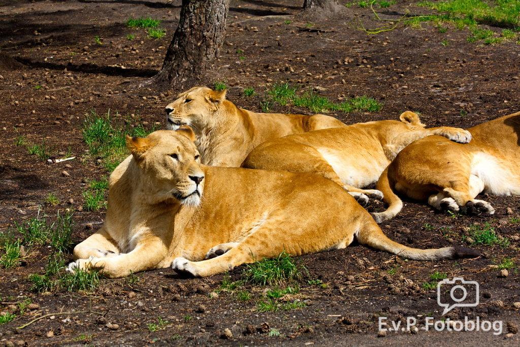 Nadja-Serengeti-140523-025.jpg
