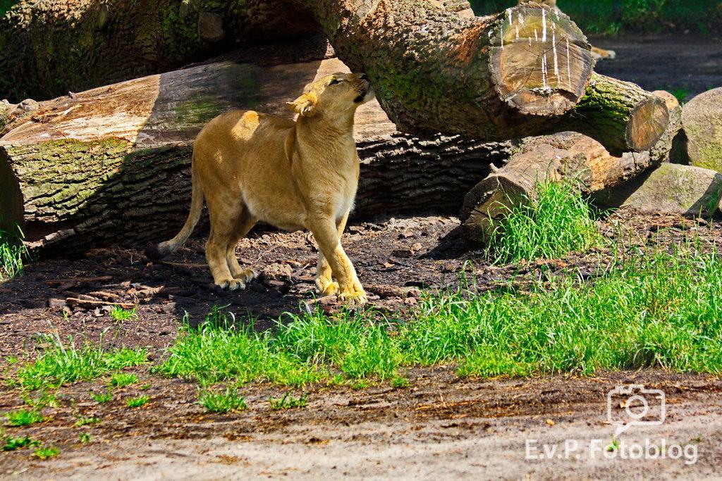 Nadja-Serengeti-140523-026.jpg