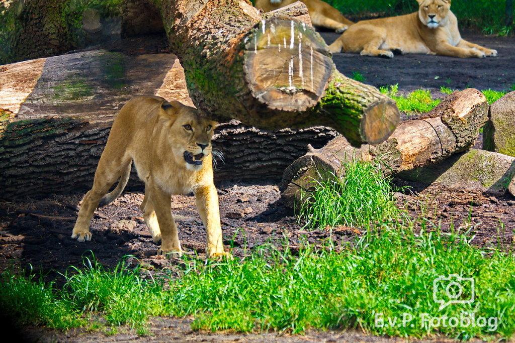 Nadja-Serengeti-140523-027.jpg