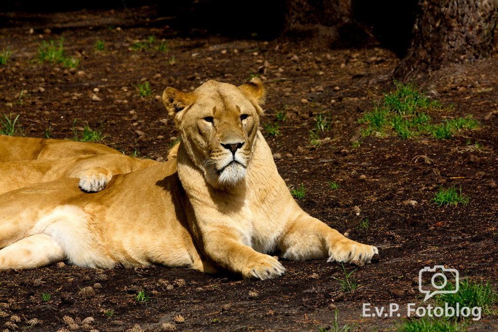 Nadja-Serengeti-140523-029.jpg