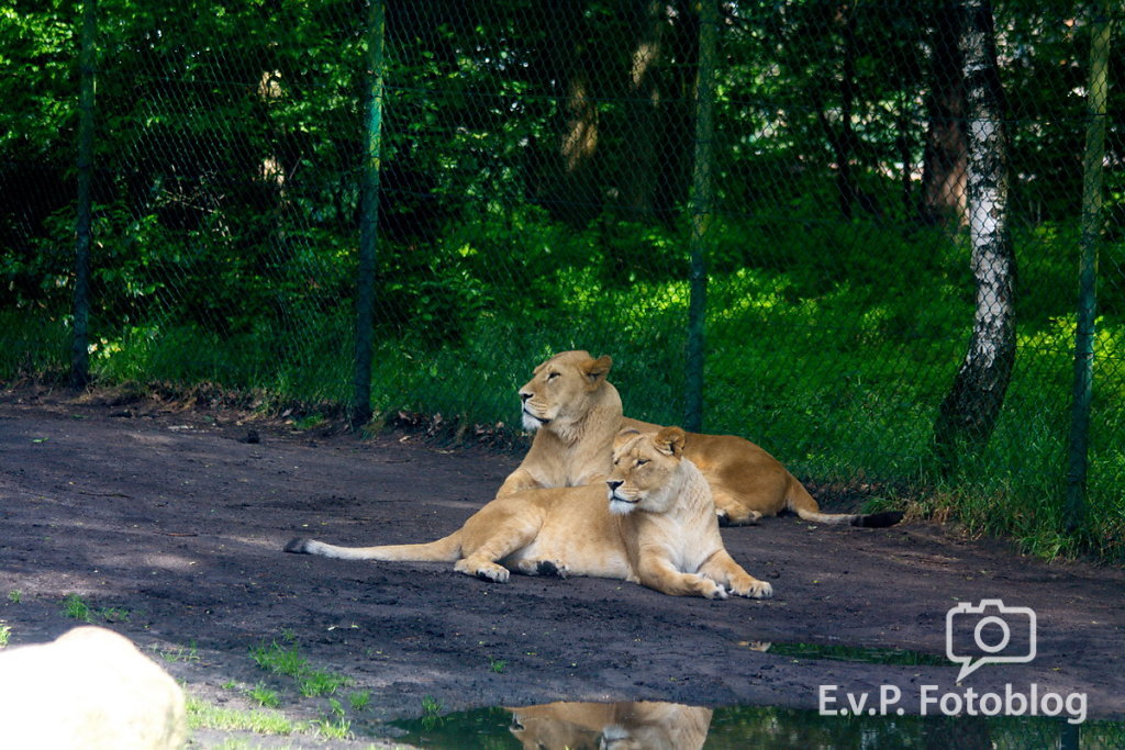 Nadja-Serengeti-140523-030.jpg
