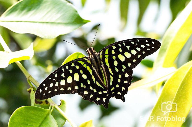 Papiliorama 2015