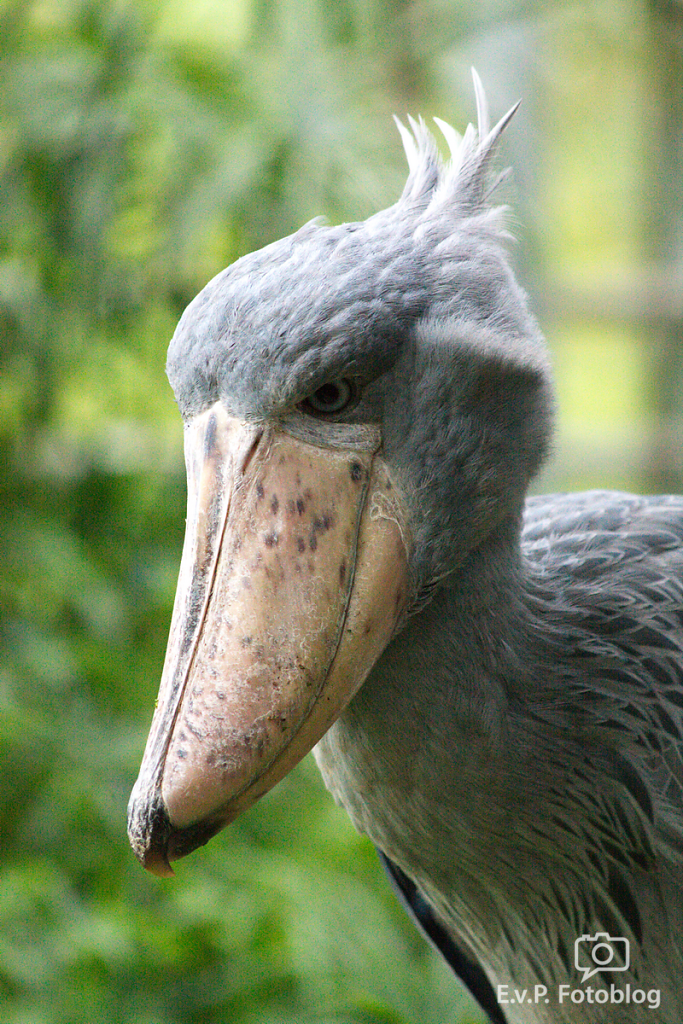 Zoo-Zuerich-120824-008.png
