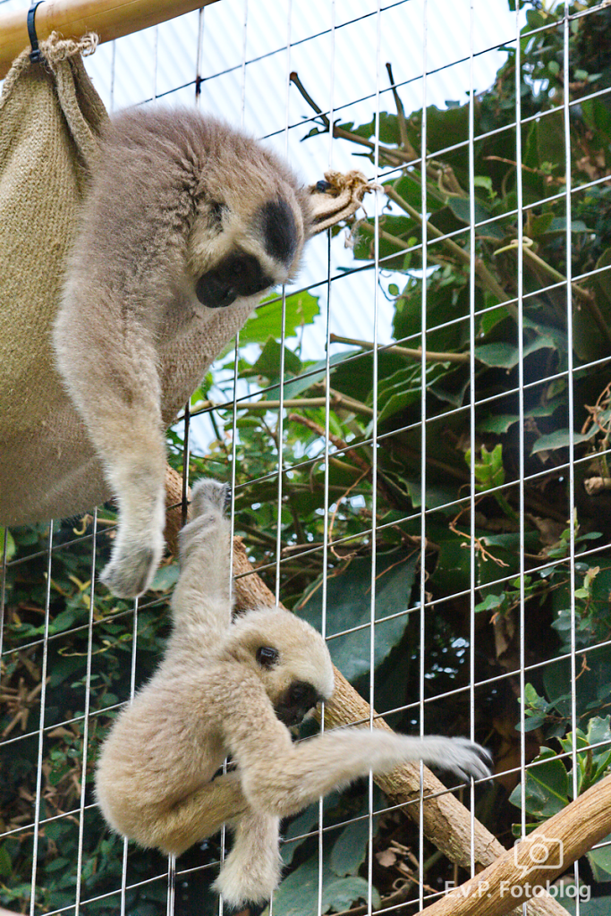 Zoo-Zuerich-120824-013.png