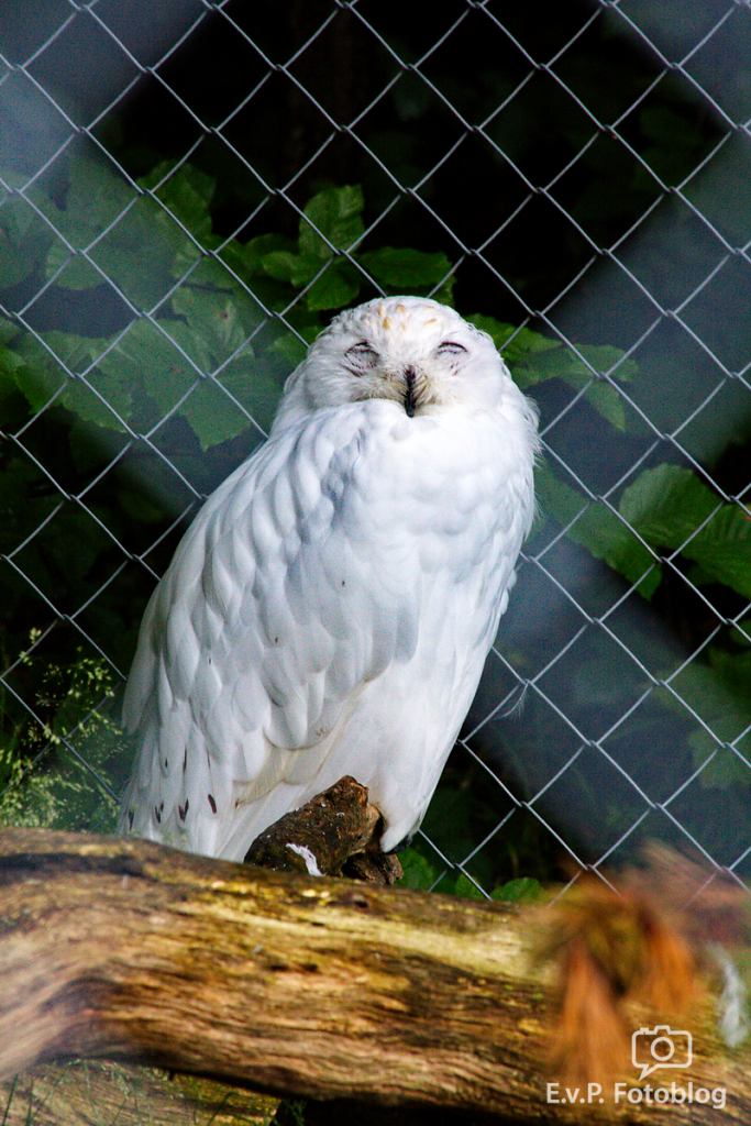 Zoo-Zuerich-120824-014.png