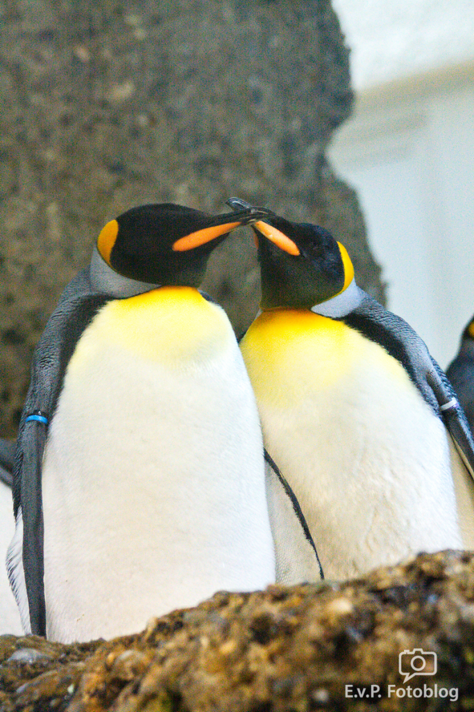 Zoo-Zuerich-120824-024.png