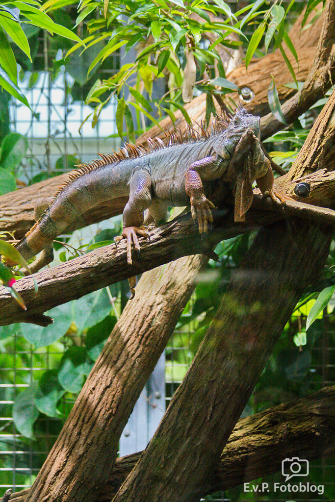 Zoo-Zuerich-120824-025.png